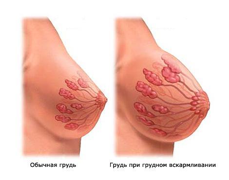 грудь при грудном кормлении